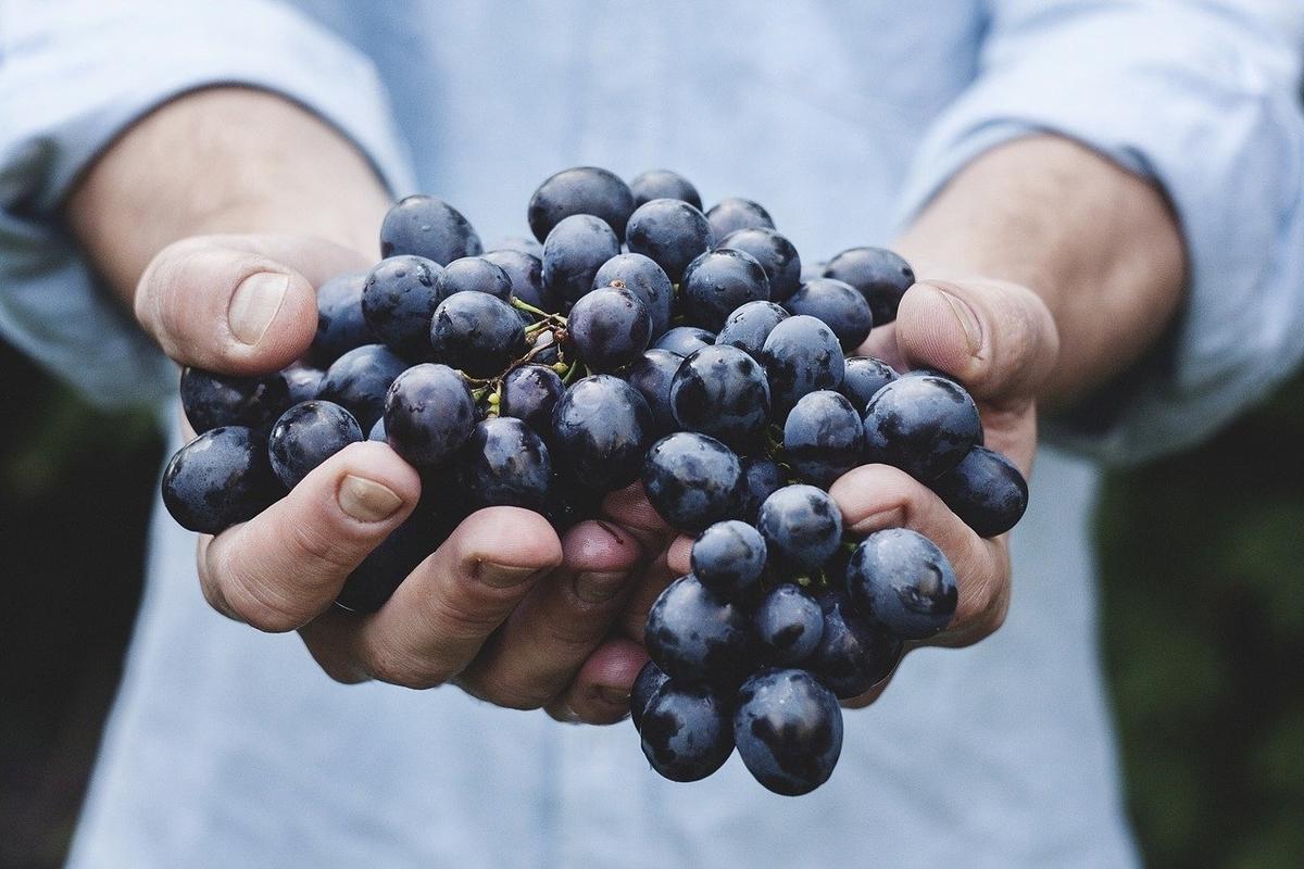organic,オーガニック,有機栽培,有機