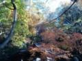 延命寺20121204_05