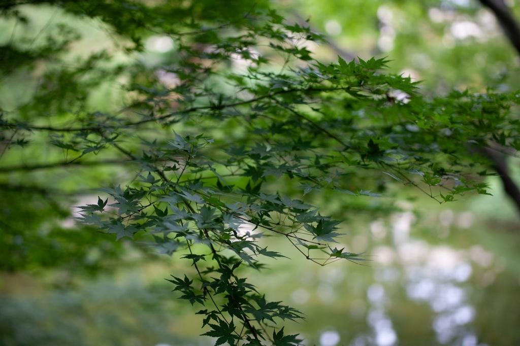 東京庭園美術館 紅葉