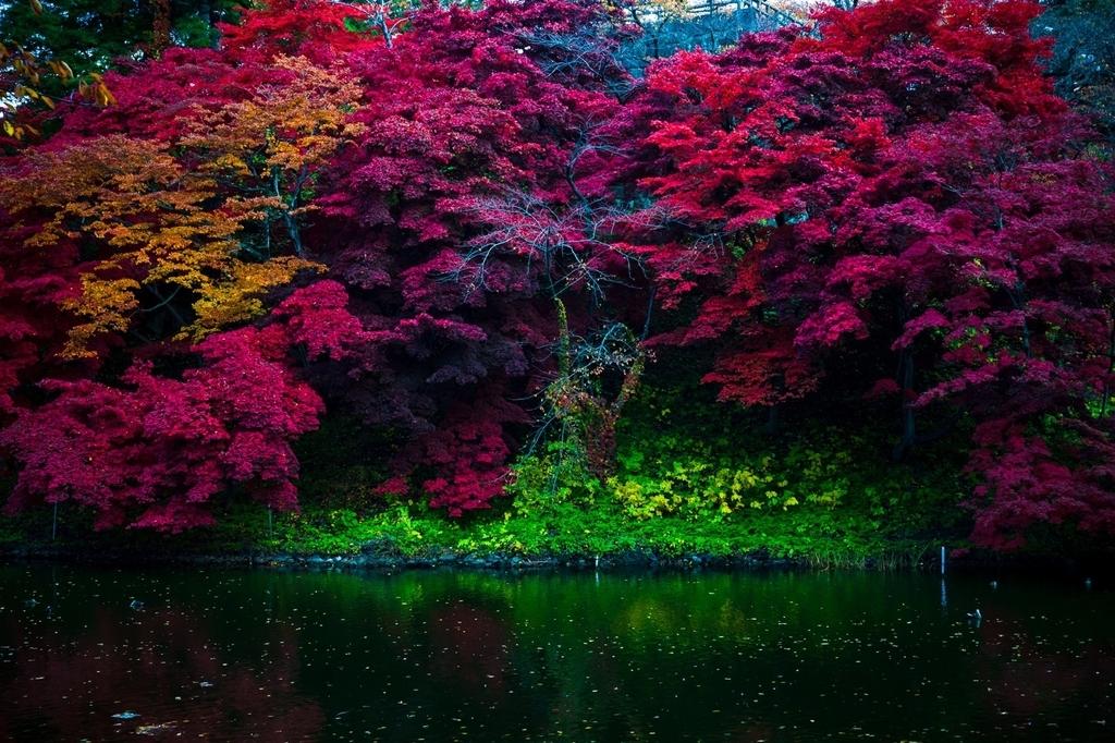 弘前公園 紅葉 菊と紅葉まつり 弘前城