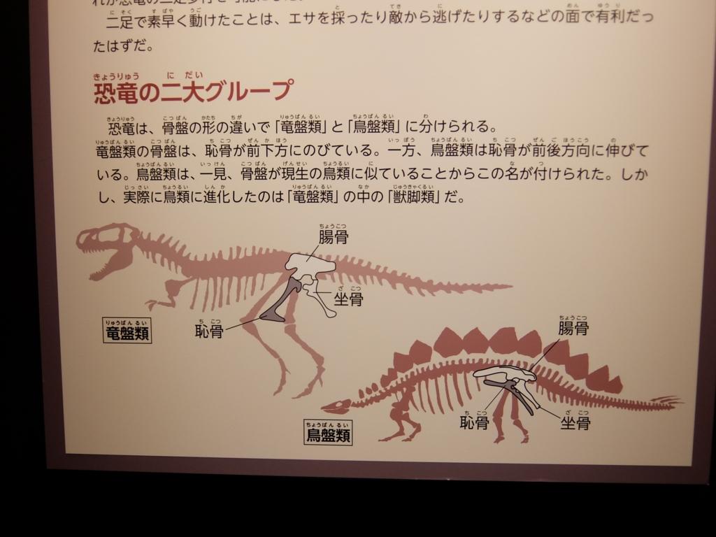 恐竜 竜盤類と鳥盤類の違いの説明