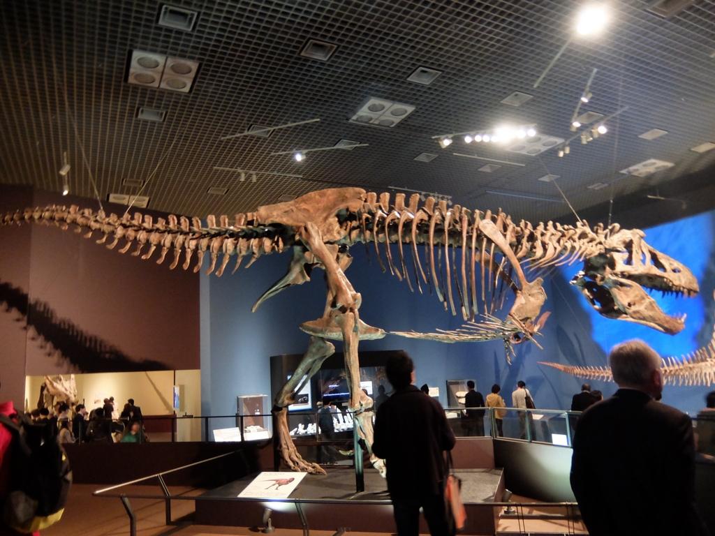 ティラノサウルスの恥骨の向き