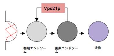 パワポ概念図.png