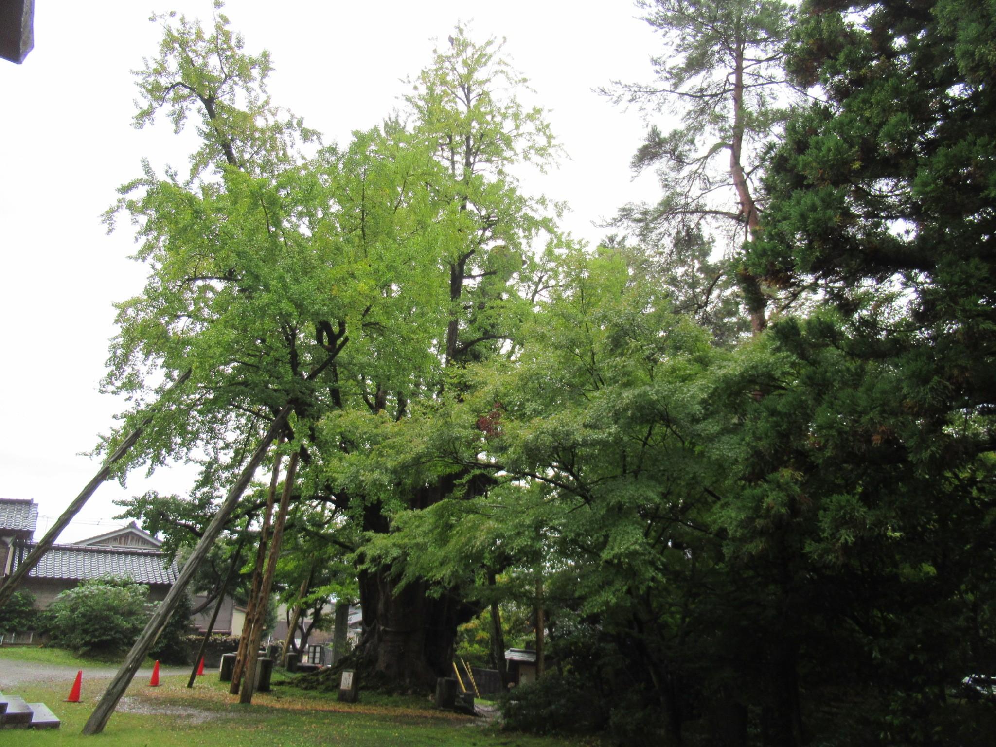 f:id:ichi-hama:20201024111304j:image