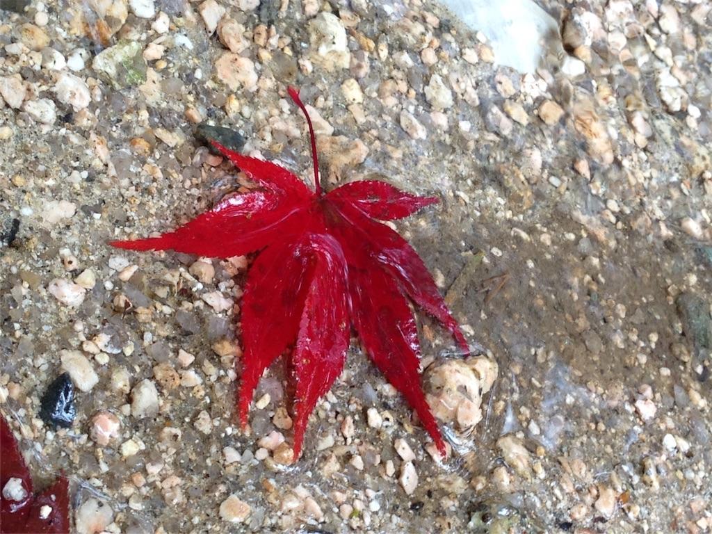 f:id:ichigo-daihuku:20161214134725j:image