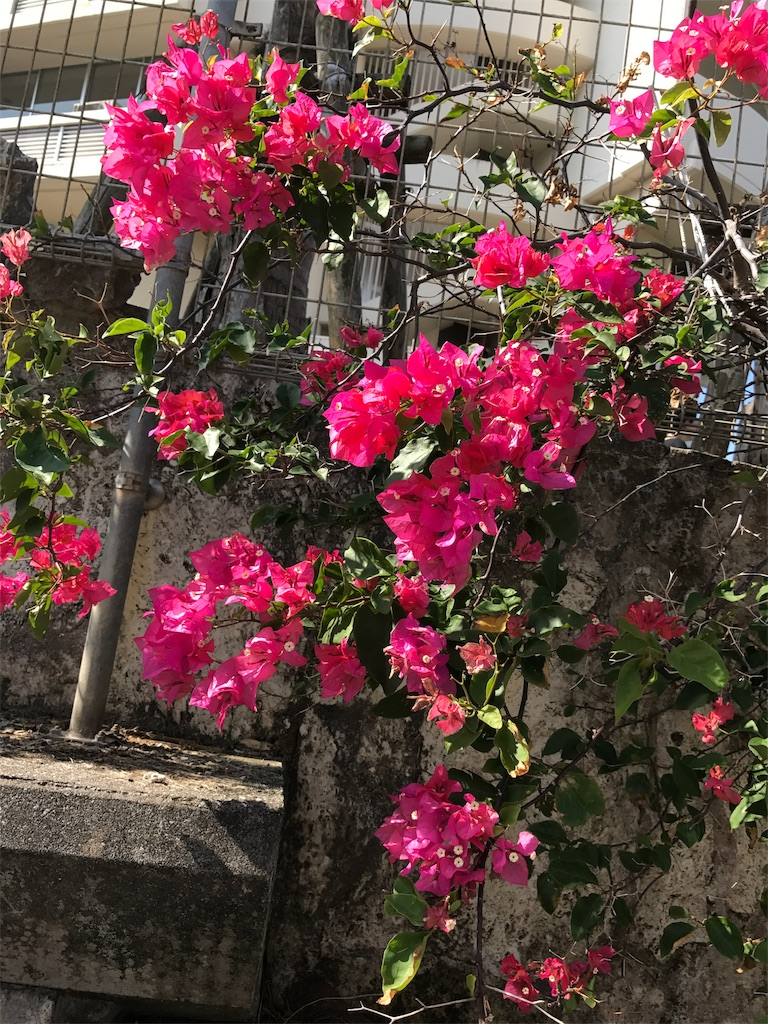 f:id:ichigo-daihuku:20170912090354j:image