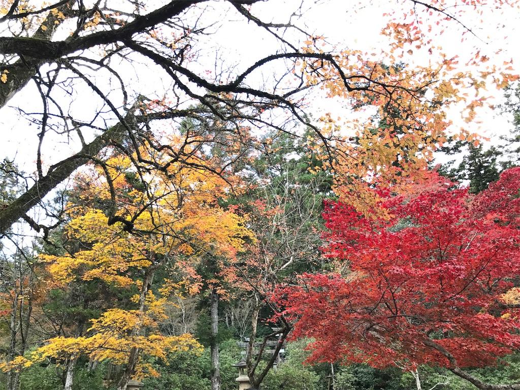 f:id:ichigo-daihuku:20171217100324j:image