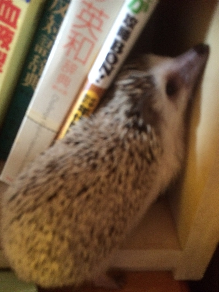 f:id:ichigo10banira:20170305112902j:image