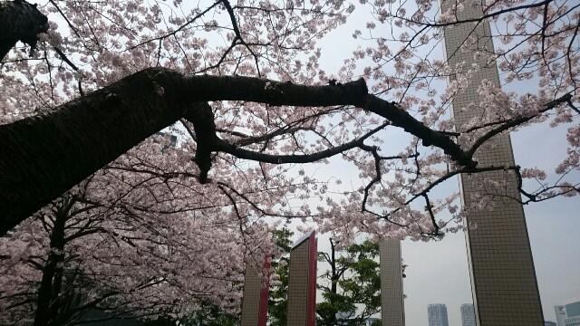 f:id:ichigo1213:20160406121956j:image
