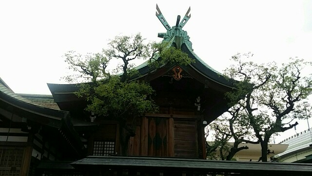 f:id:ichigo2015:20160615224443j:image