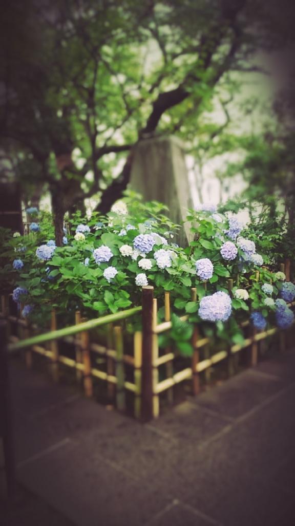 f:id:ichigo2015:20160616213932j:plain