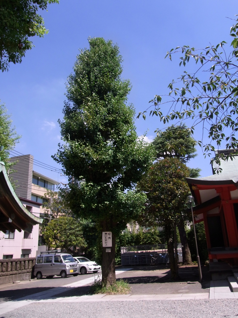 f:id:ichigo2015:20160730185815j:plain