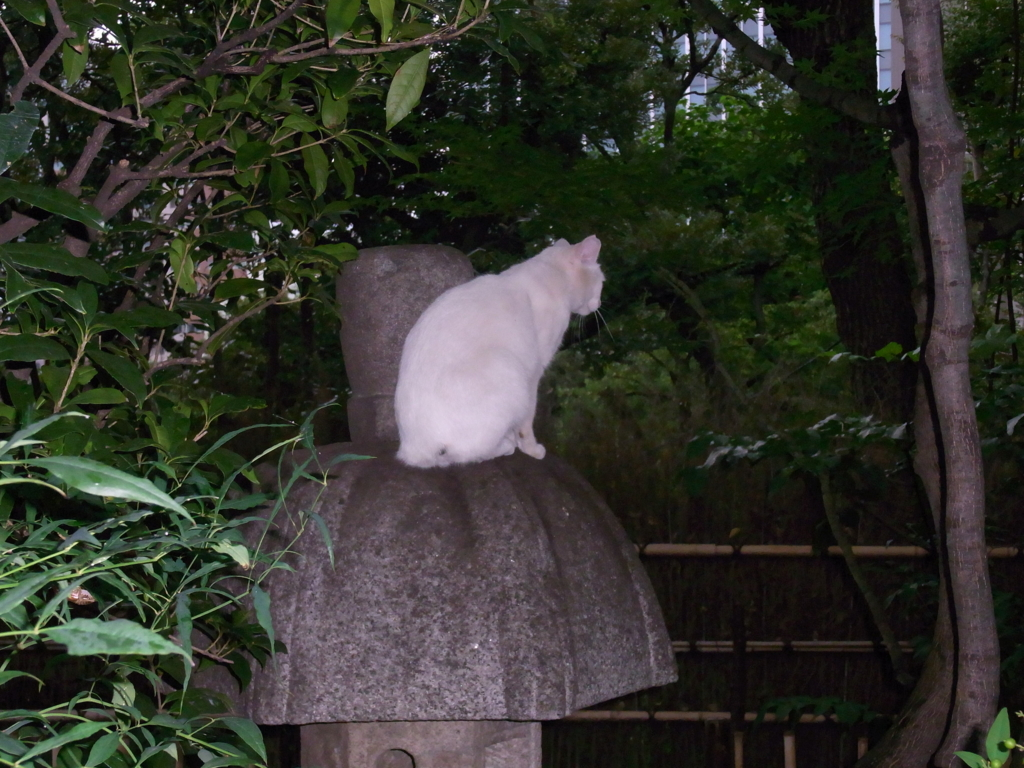 f:id:ichigo2015:20160827173327j:plain