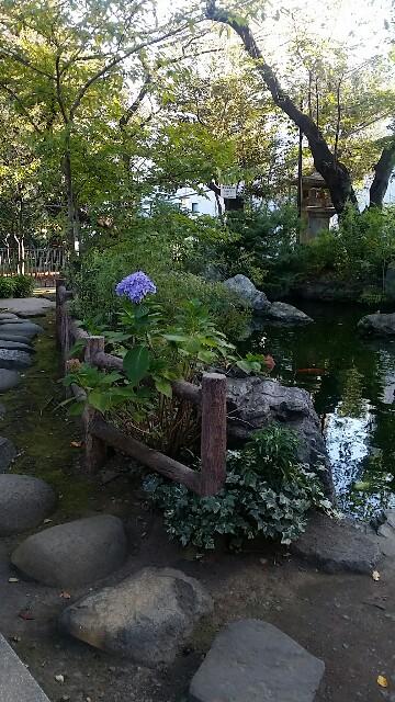 f:id:ichigo2015:20161027080303j:image