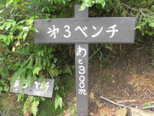 f:id:ichigokiwinassy:20170614155207p:image