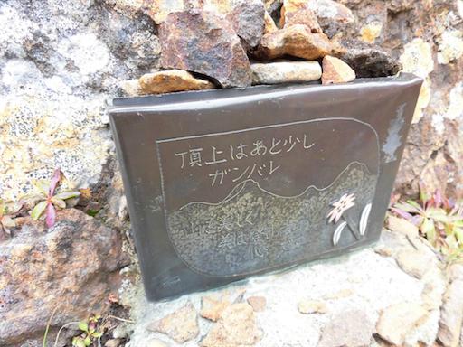 f:id:ichigokiwinassy:20170622144621p:image