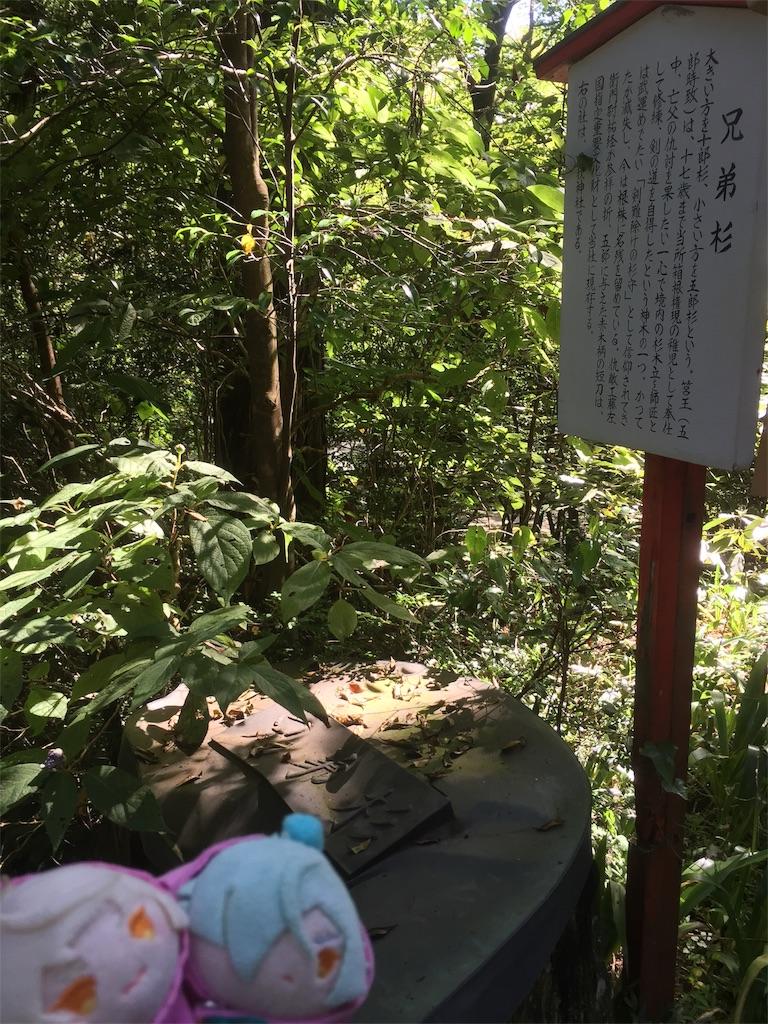 f:id:ichijiku0801:20190811100043j:image