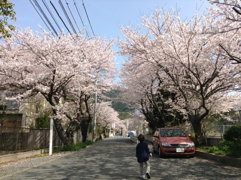 f:id:ichikawa-seipanten:20130330095200j:image:w500