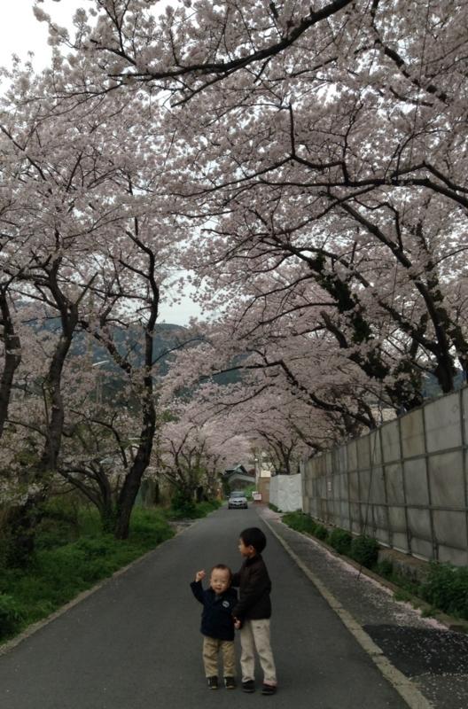 f:id:ichikawa-seipanten:20140403143831j:image:w450