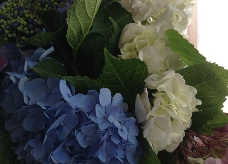 f:id:ichikawa-seipanten:20140608153630j:image:w460