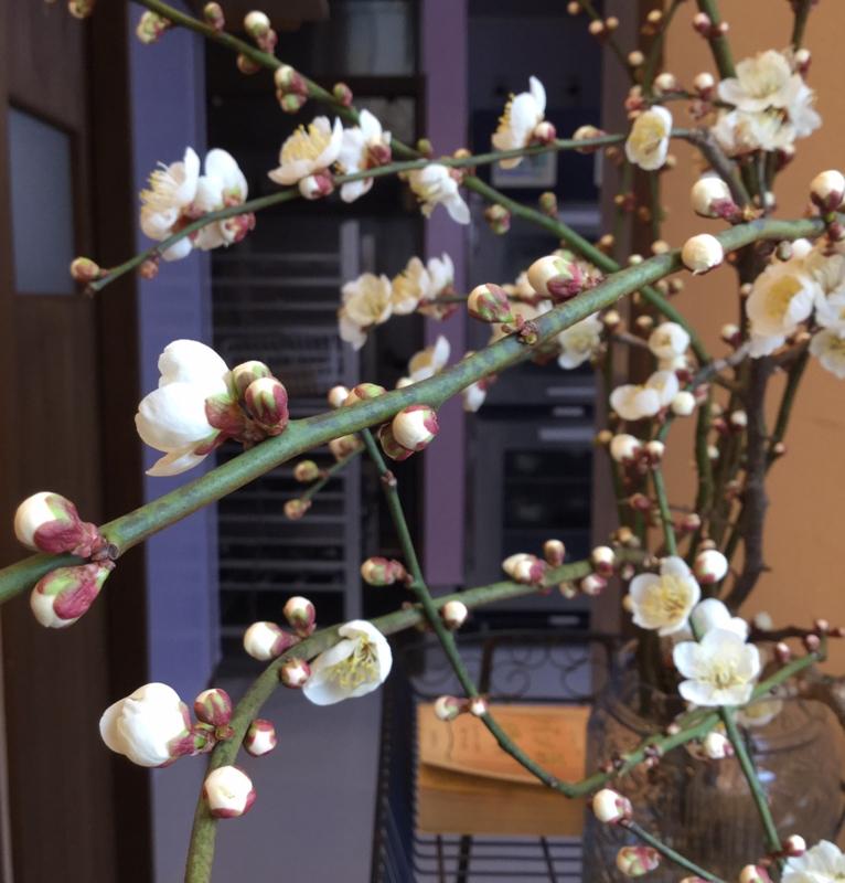 f:id:ichikawa-seipanten:20150215154125j:image:w260