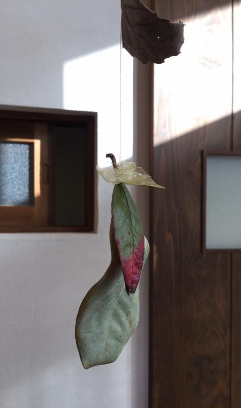 f:id:ichikawa-seipanten:20151216215747j:image:w380