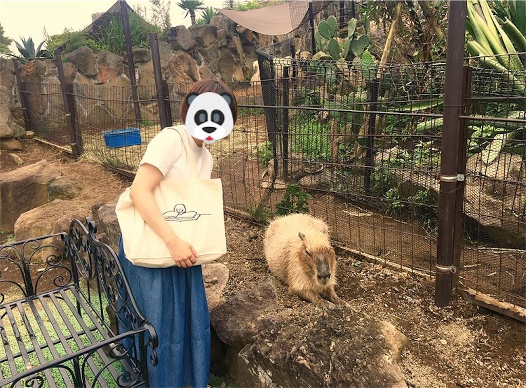 f:id:ichiko-blg:20170802091059j:image