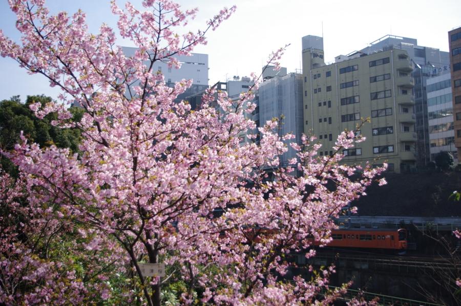 [201系][中央線][桜][御茶ノ水][水道橋][愛されて30年]