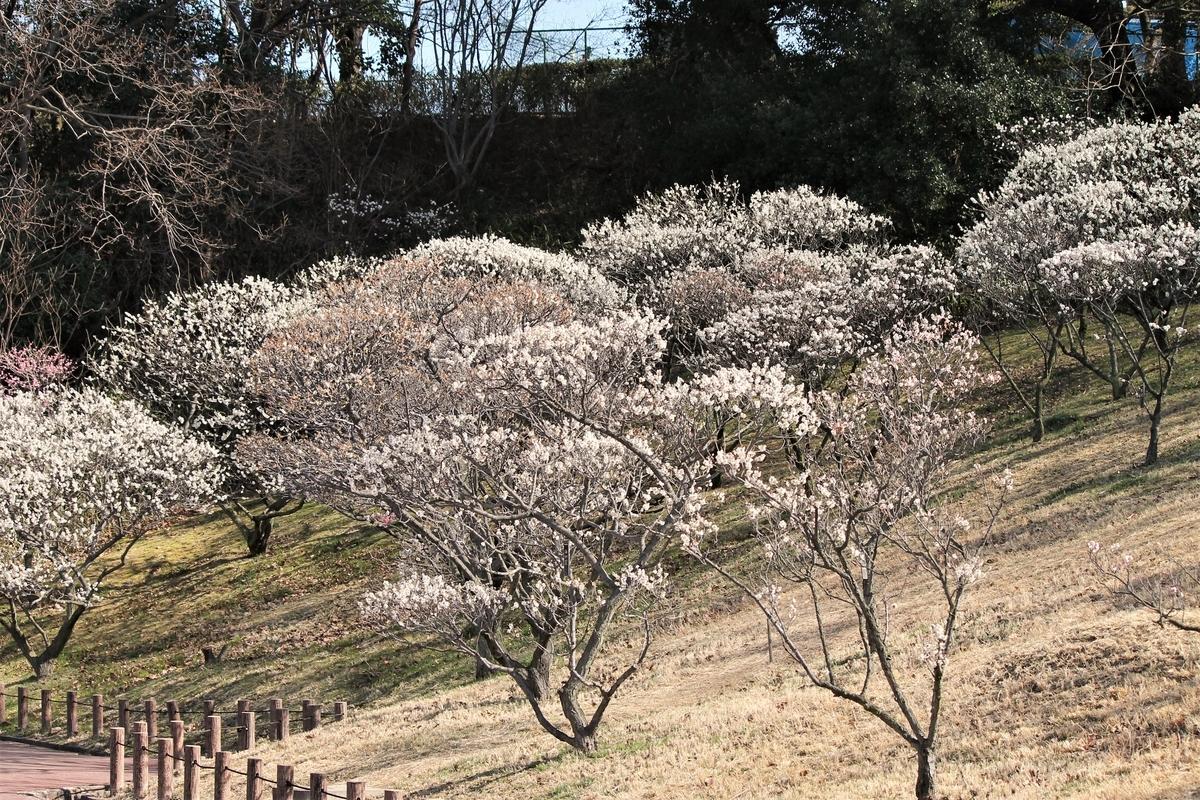 f:id:ichinokai-kanazawa:20000101000005j:plain