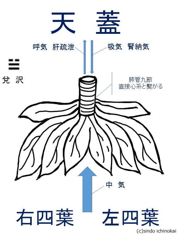 f:id:ichinokai-kanazawa:20200628071938j:plain