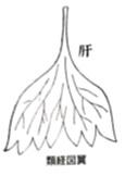 f:id:ichinokai-kanazawa:20201001063356j:plain