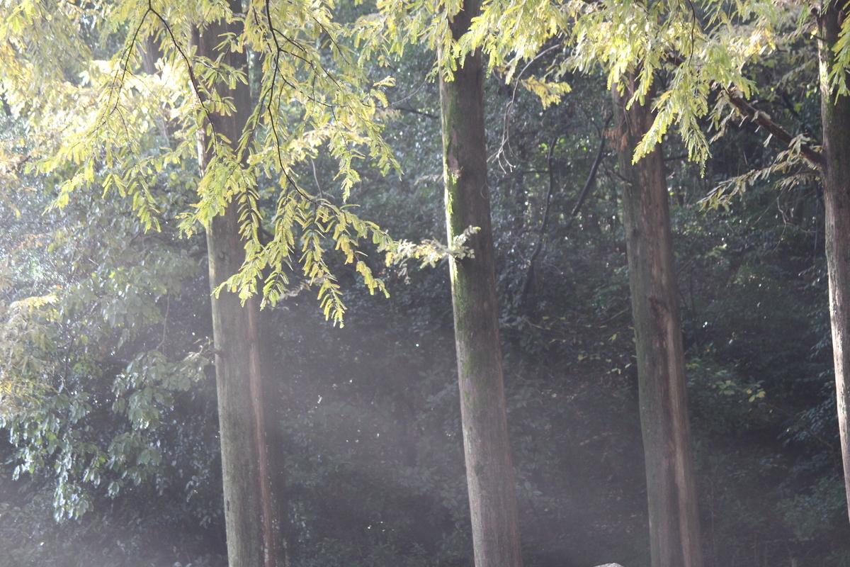 f:id:ichinokai-kanazawa:20201110103906j:plain