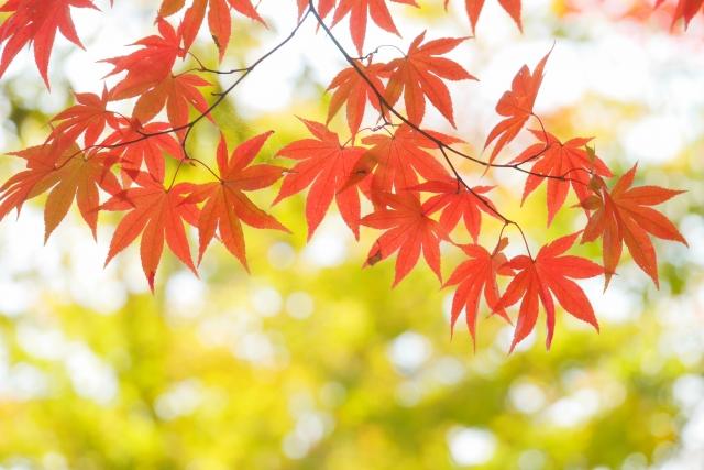 f:id:ichinokai-kanazawa:20201124101051j:plain