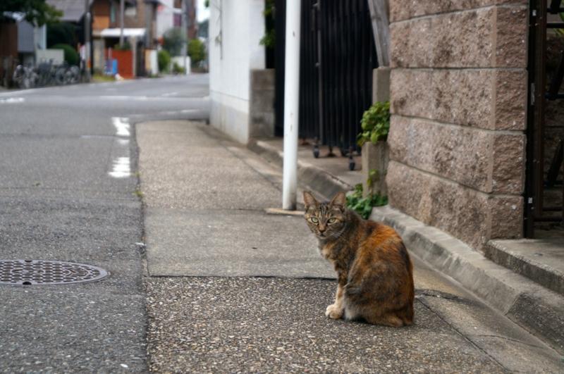 f:id:ichionaoki:20140919163429j:image:w640