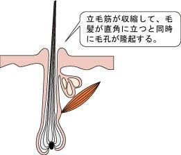 Torihada2