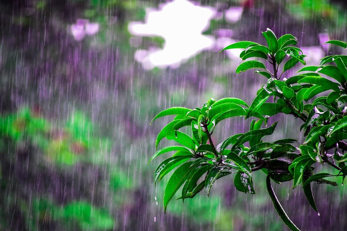 東海、関東甲信越で梅雨入り