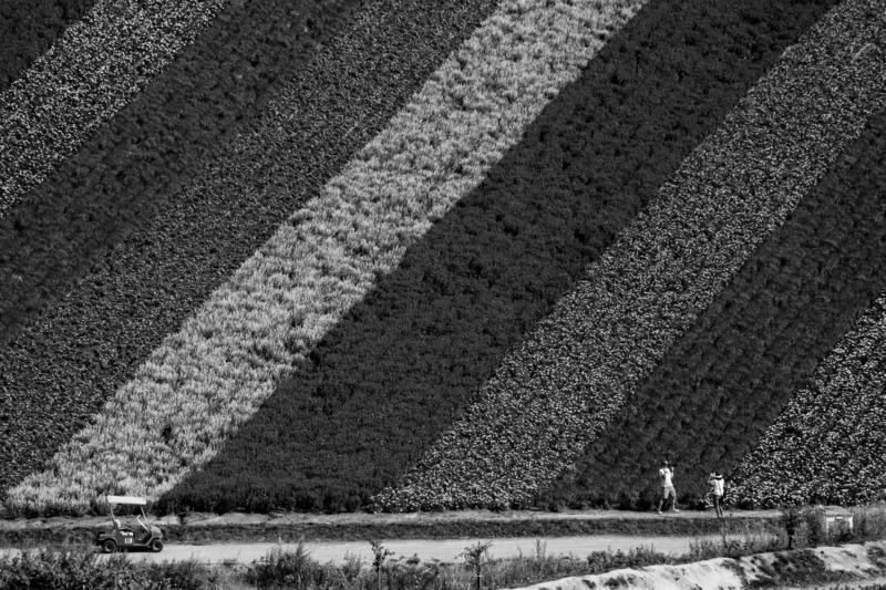 富良野の四季彩の丘