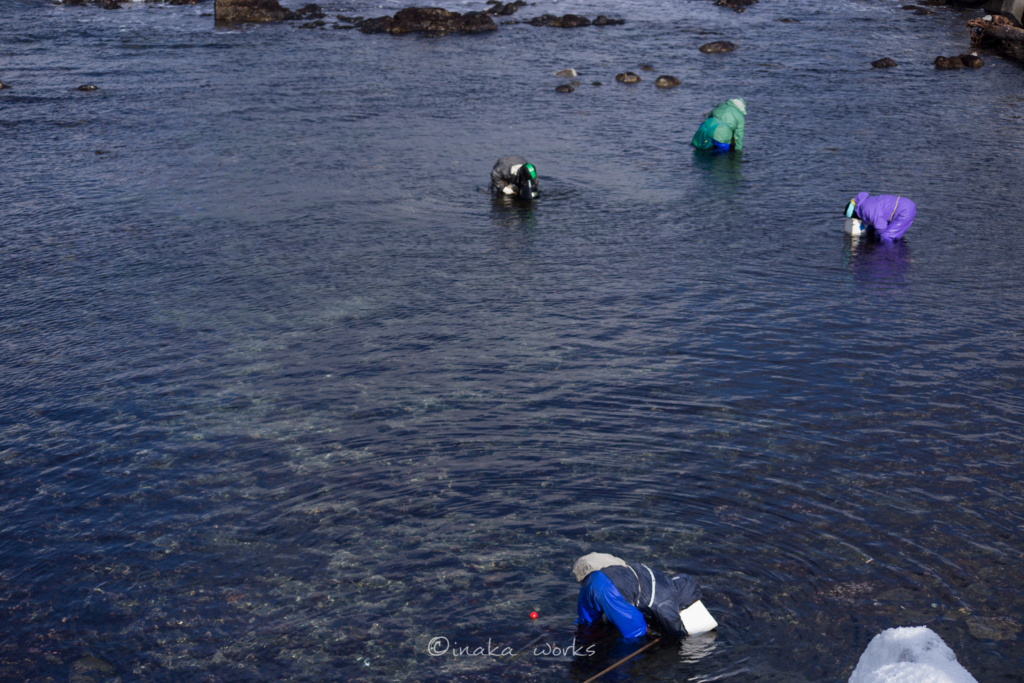 先客がいた海藻スポット