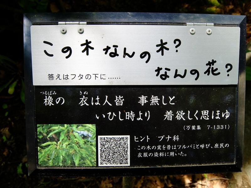 f:id:iechiko:20210505100922j:plain