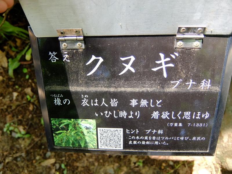 f:id:iechiko:20210505100937j:plain