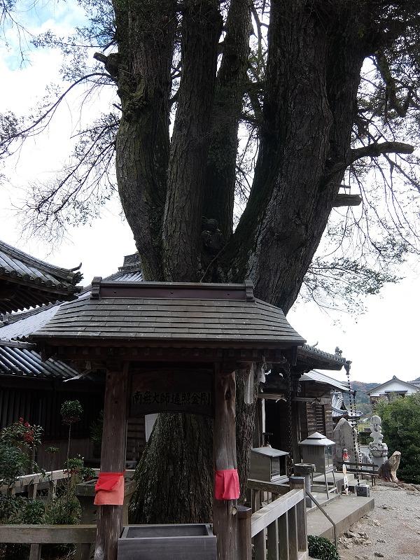 f:id:iechiko:20210711111414j:plain