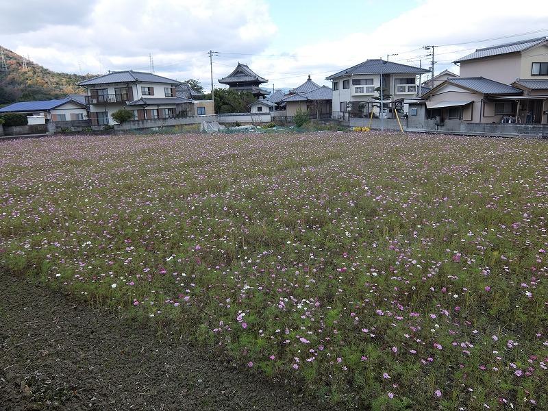 f:id:iechiko:20210711111500j:plain