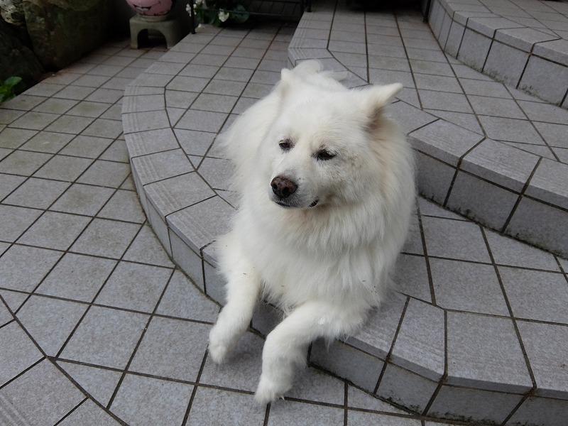 f:id:iechiko:20210717124845j:plain