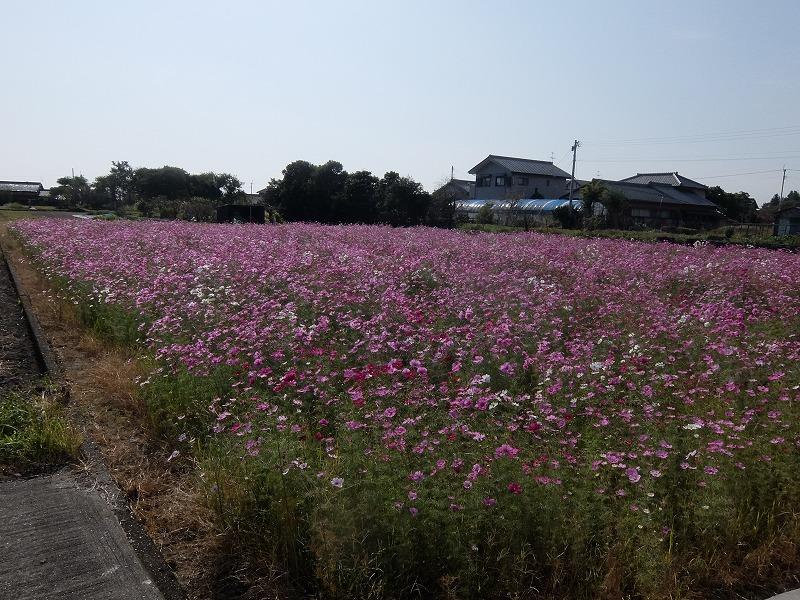 f:id:iechiko:20210724101310j:plain