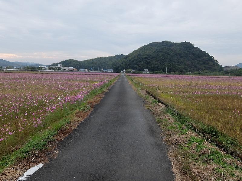 f:id:iechiko:20210725085413j:plain