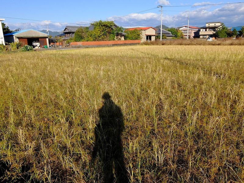 f:id:iechiko:20210726201554j:plain