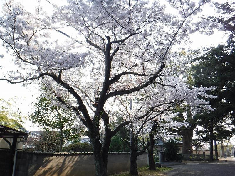 f:id:iechiko:20210909170722j:plain