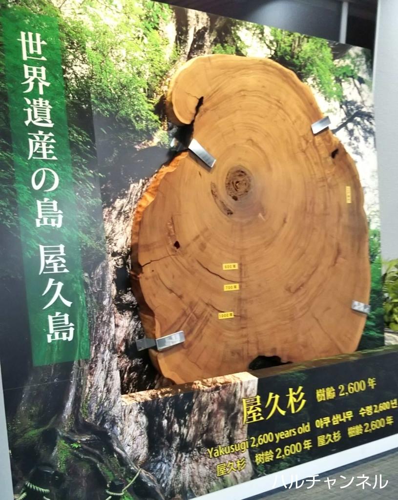 屋久島の杉の木の年輪オブジェ