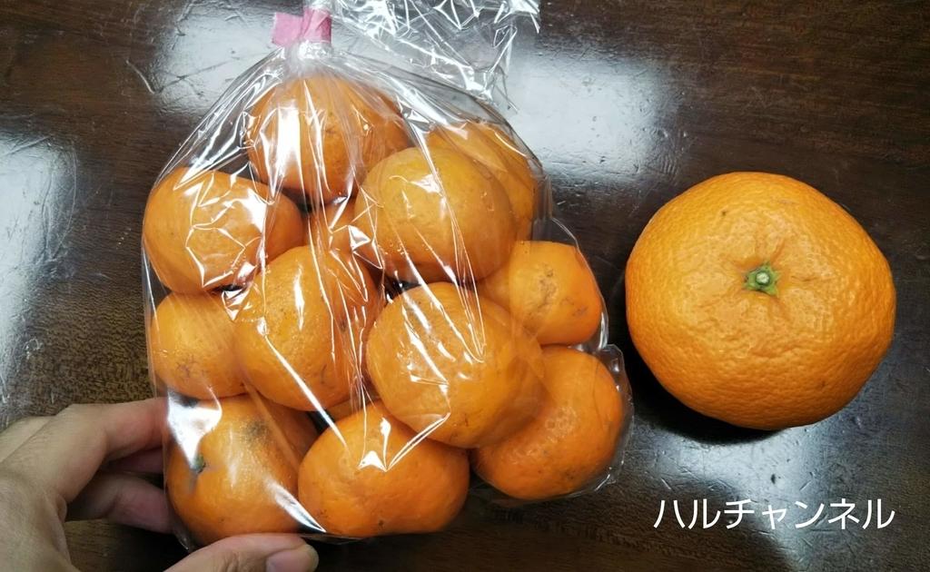 鹿児島『桜島こみかん』