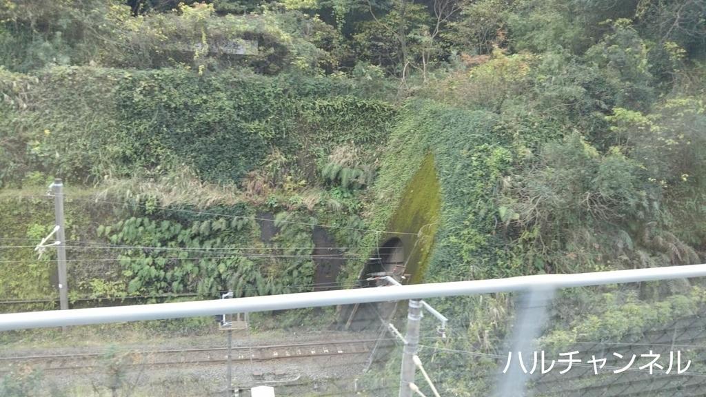 トトロに出てきそうなトンネル
